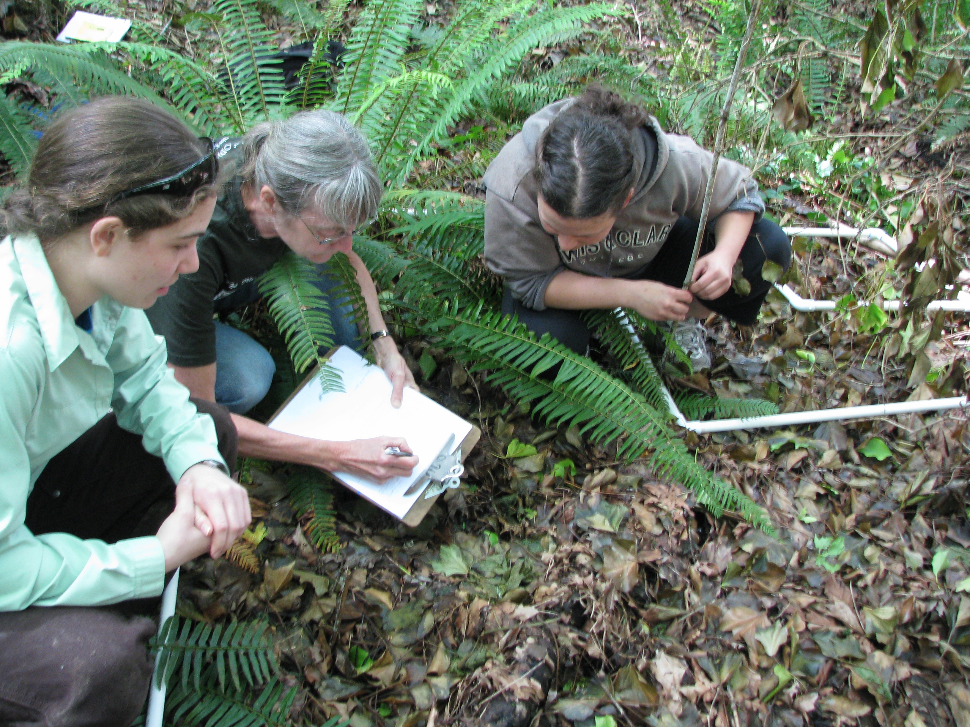 Investigating Forest Recovery in River View Natural Area After Removal of Invasive Plant Species