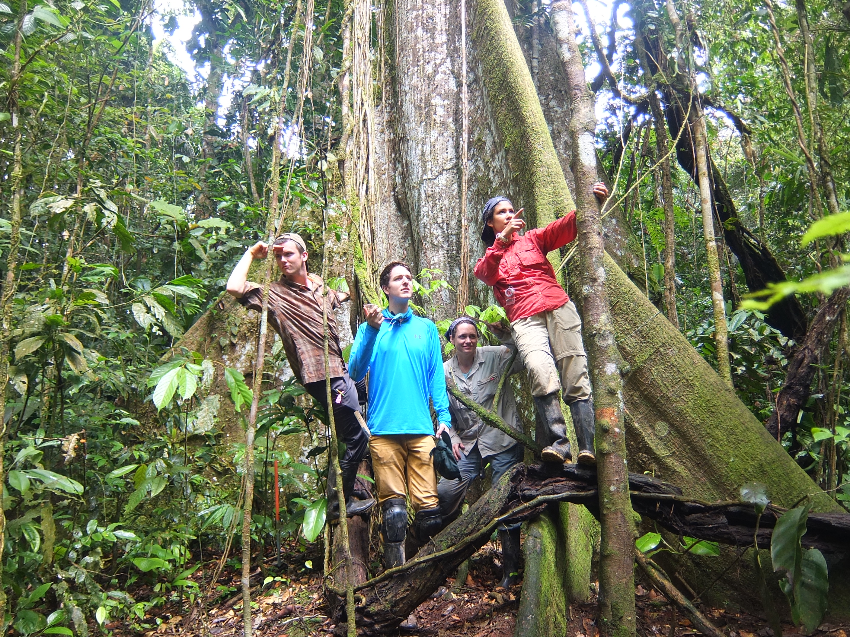 Seedling dynamics and the maintenance of diversity in an Amazonian rainforest